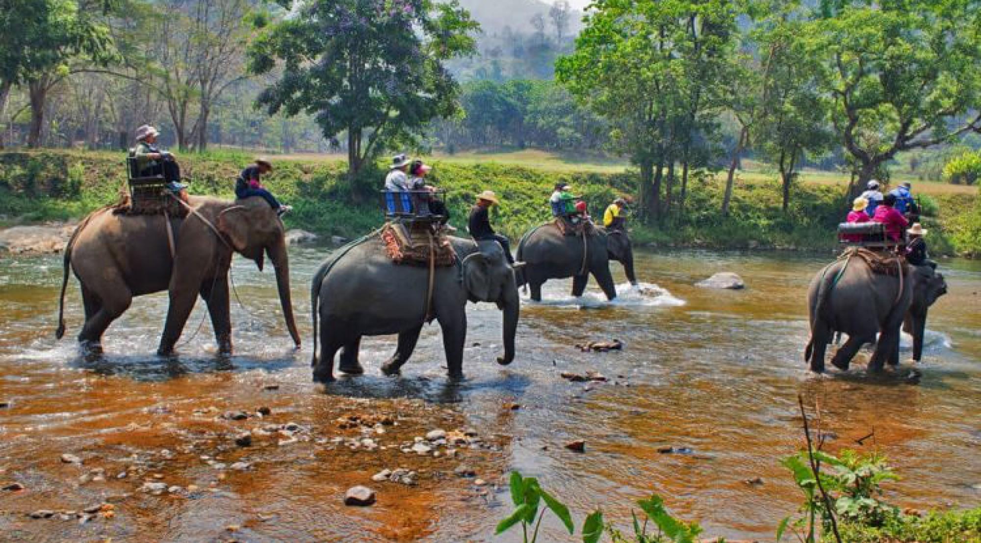 Jungle Safari In Chtiwan